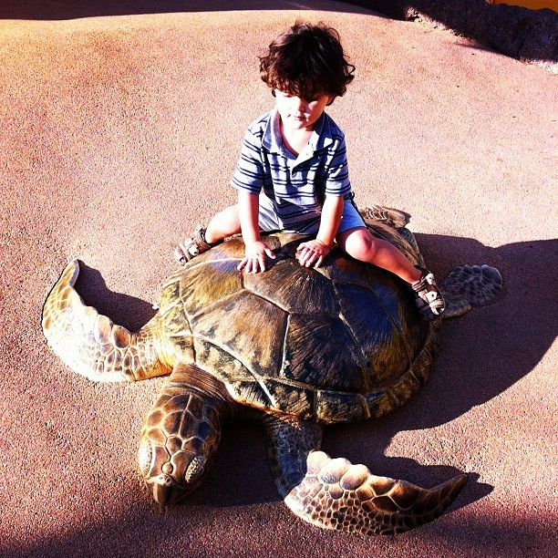 Turtle! (Taken with Instagram at SeaWorld San Diego)