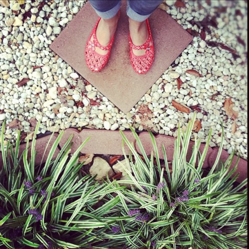 garden shoes. (Taken with instagram)