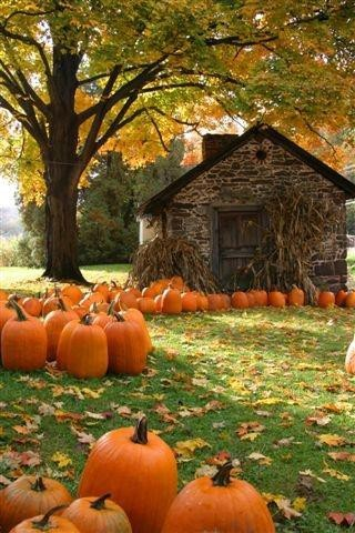 The Pumpkin Patch, Woodstock, VT (via Favorite Places and Spaces)