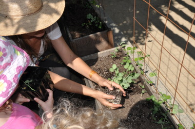 ediblegardensla:  School gardens.  I teach edible gardening at three schools in Los Angeles, grades pre k - 6.  I love watching the light go on inside the students as they begin to make the connection between garden and table.  The first classes focus on soil and how soil is the most important part of starting a garden.  We talk about how if the soil isn't filled with rich nutrients, our plants will not flourish.  We spend lots of time working in the soil, hands arms and all. We then plant the first tender seedlings, in this case peas.