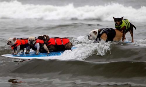 Monday not going so hot so far? OHWAIT, LOOK AT THESE SURFING DOGS. More here.
