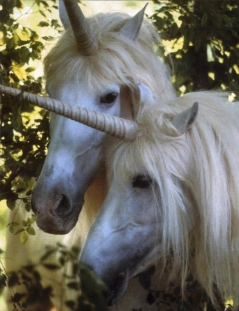 OMG! Real unicorns!!