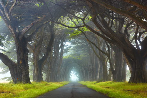 reserve123:  Point Reyes in #California. We have roads like this in #Savannah. One of the more famous  one is in Wormsloe Historic site. #travel #tt  naderm:  Point Reyes | CA