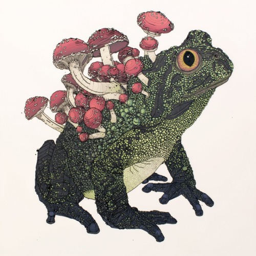 "nicholasdigenova:  ""Cordyseps Toad"", ink and animation paint on mylar, 24"" x 24"", 2011"