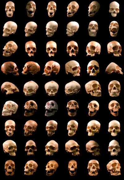moshita:  54 human skulls  o! i use these for my skull studies