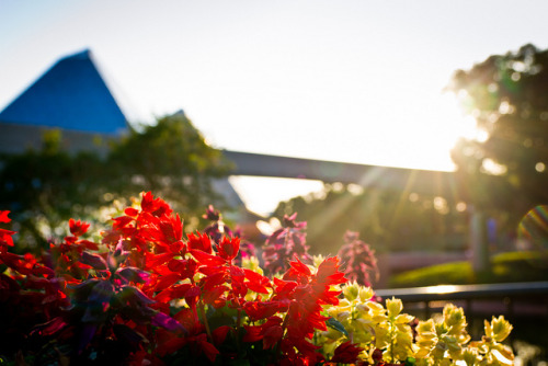 callmeprincecharming:  Epcot - Sunlight Bouquet by SpreadTheMagic on Flickr.
