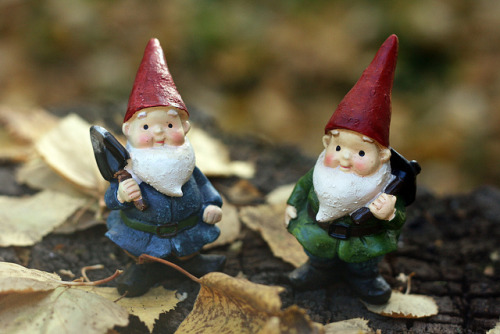 Autumn Gnomes on Flickr.