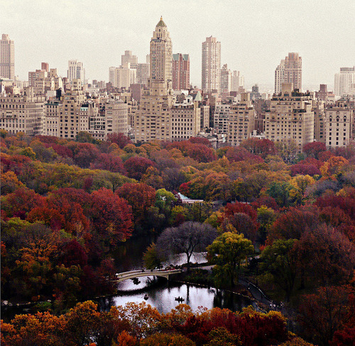 urbangreens:  Central Park via defytheleader  fantastico!