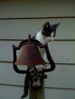 My kitten on the dinner bell in my backyard.