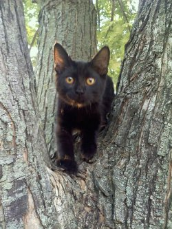 This is my kitten Shadow up in a tree.