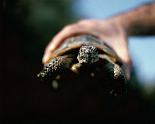 Beautiful turtle photograph thefilthyyouth:  (by Emir Ozsahin)