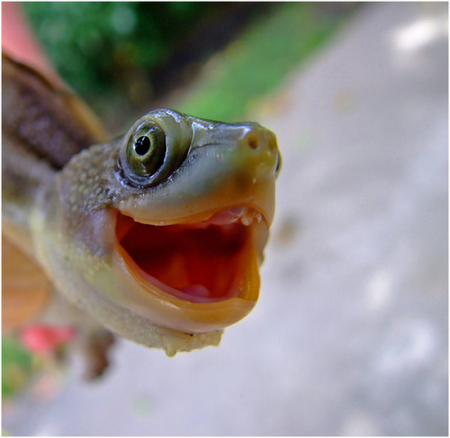Turtles! Acting out emoticon faces! It's awesome because turtles are the best, and now whenever anyone puts a stupid emoticon face in a lame thing they write to you, you can just go ahead and imagine one of these little guys instead! YAY!  :D [via Buzzfeed]