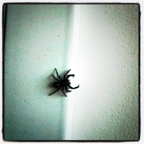 Spider at work (Taken with instagram)