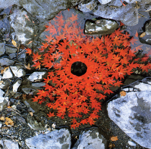 smallplanetgardens:  Autumn through the eyes of my favorite artist, Andy Goldsworthy.