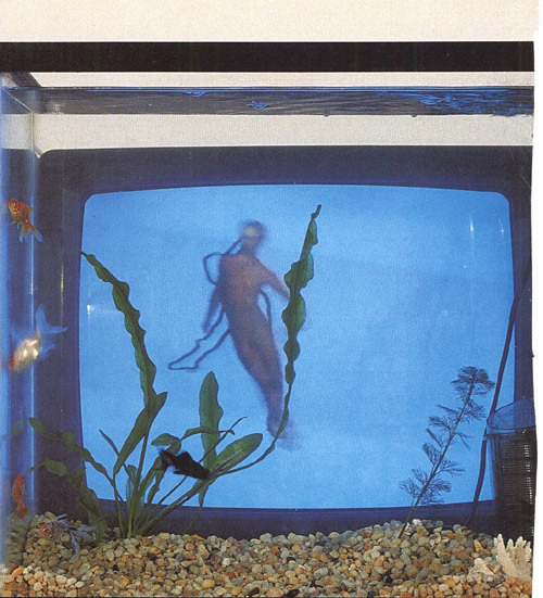 cavetocanvas:  Video Fish - Nam June Paik, 1975 Click here to see a partial video of this artwork.