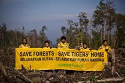 """Last week, our Tiger's Eye Tour activists heard that the infamous ""deforester"", APP, was holding a media tour in Indonesia. The aim of the tour was to show journalists just how green and forest-friendly APP is, which we all know isn't really the case. But fear not – our activists showed up to tell the journalists the truth about deforestation in Indonesia: http://act.gp/qm1elF"" Greenpeace International."