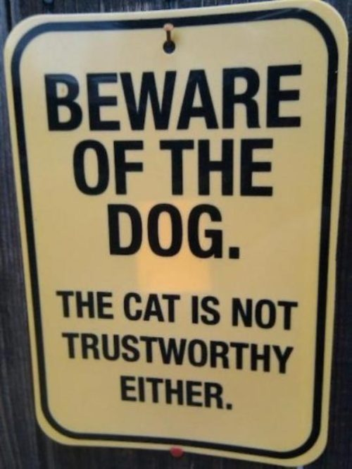 ludavick:  catasters:  Trustworthy  (via imgTumble)