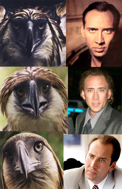 i found a bird that looks like nic cage today im pretty tired today too