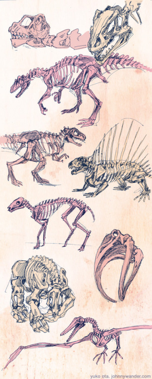 aidosaur:  dinosaur & other prehistoric animal gesture drawings from the smithsonian.  ballpoint pen colored with photoshop. Sorry I've been absent; I'm in DC for a wedding until next week.  Speakin' of DC, have some drawings from the Smithsonian Natural History Museum!  Admittedly, the color treatment was completely swiped from this picture by Bequietyellingcat. (sorry and thank you!) [edit - Aw dang, the image is too tall!  You can now click through for the hosted image.]