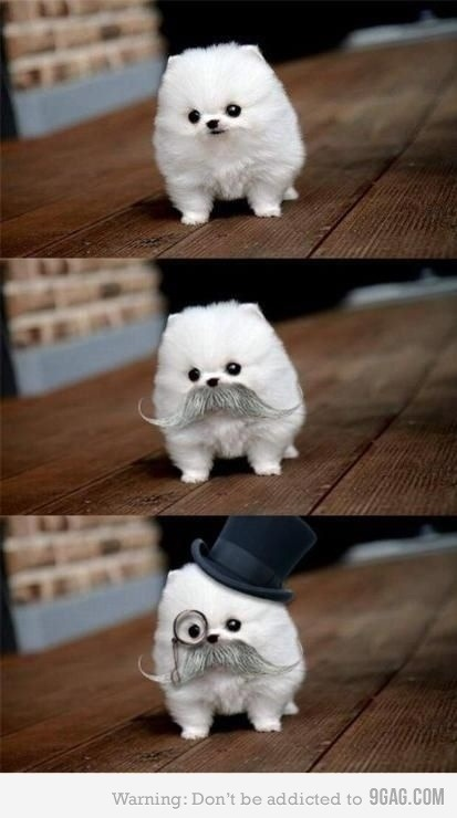 Mr. Monopoly Dog? Mr. Monopoly Dog!!! He's worth billions (in dog money).