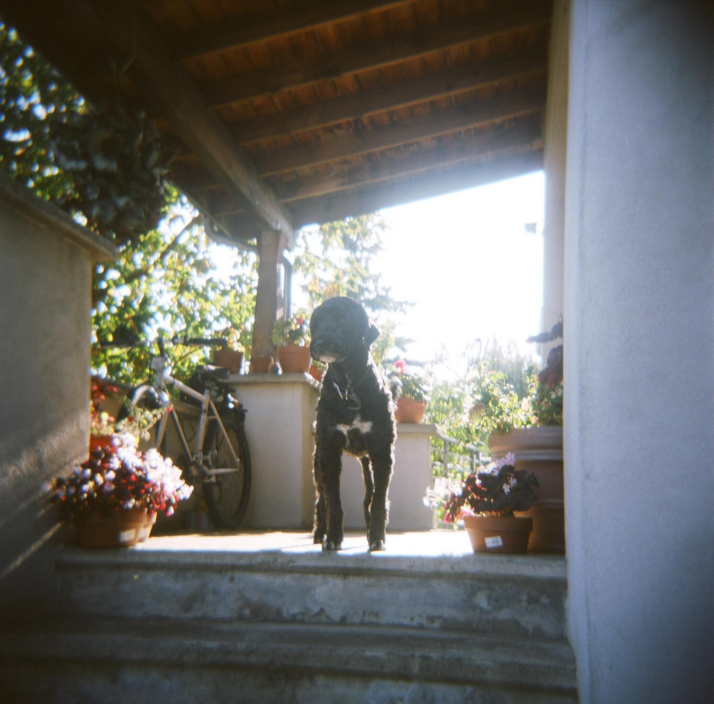 My porch,  my dog Tito  holga photo by tsparks