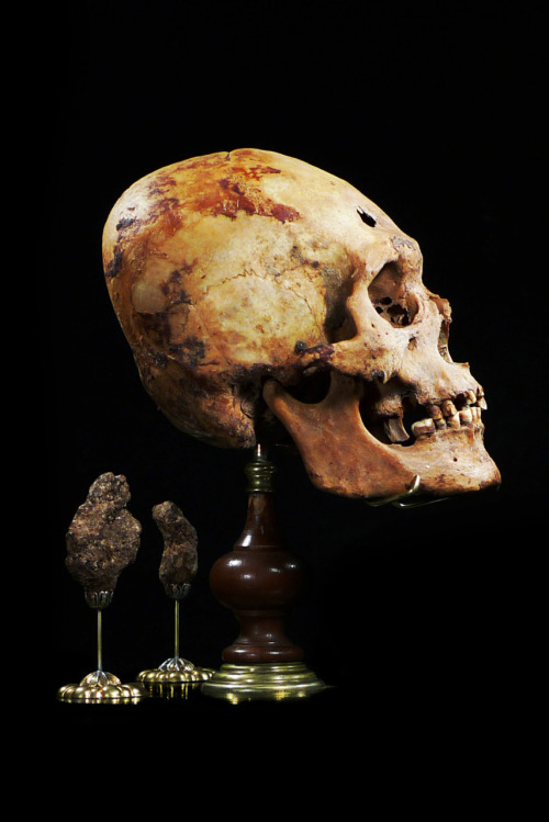 ryanmatthewcohn:  Ancient Elongated Skull with Mummified Brain Matter. Mounted by Ryan Matthew. Photo by Sergio Royzen.