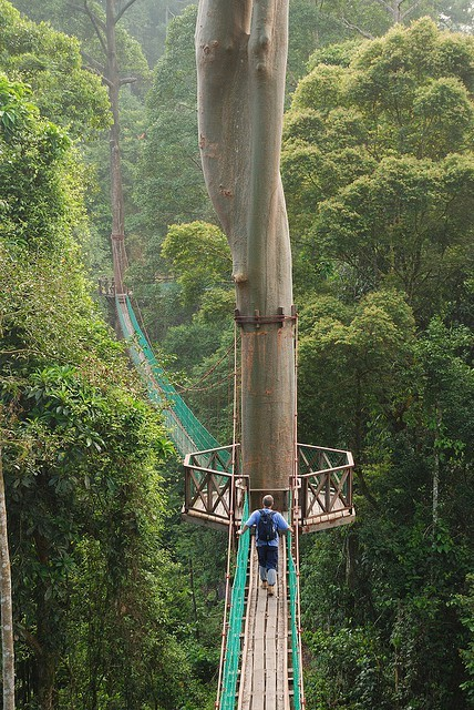 bluepueblo:  Rainforest Canopy Walkway, Borneo  photo via chris