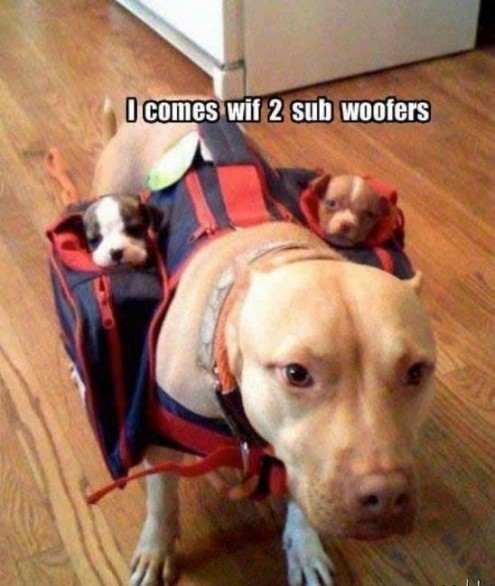Picture This - 'Two Subwoofers' (WIDK)  (WIDK) — This dog comes with two subwoofers. Source: Imgur Original Article