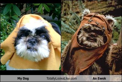 Totally the same creature. via @bonniegrrl