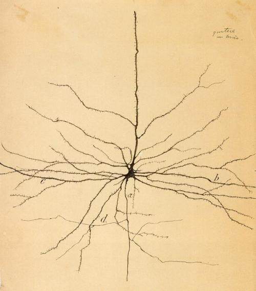 """One of the first drawings of a neuron"" by Ramón y Cajal (Via) writersnoonereads:  No one reads Dr. Bacteria, pseudonym of Spanish neurobiologist and Nobel Prize winner Santiago Ramón y Cajal (1852-1934). From an article by Laura Otis, translator of Cajal's Vacation Stories:  Few scientists who admire neurobiologist Santiago Ramón y Cajal's extraordinary drawings of neurons know that early in his career, he wrote science fiction. Cajal's Vacation Stories, written in 1885–86 and published in 1905, explore the ethical consequences of what was then cutting-edge science: bacteriology, artificial insemination, photography, and the power of suggestion. Those who have read Cajal's Recollections of My Life and Advice for a Young Investigator know how vividly he recreates the lab atmosphere for readers, but his short stories have a creative vision and wicked humor that even these classics lack. In his first years as a scientist, Cajal used fiction to take a ""vacation"" from the rules of scientific writing so that he could consider the future of science. [cont. reading]"