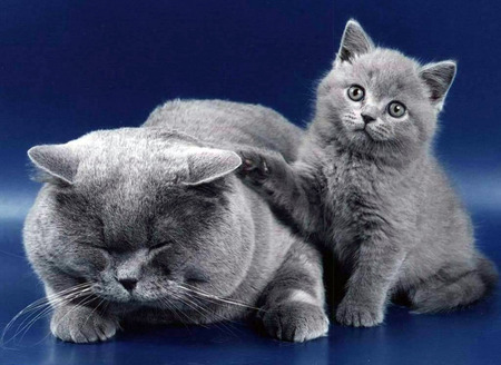More grey cats.
