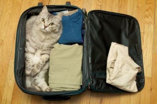 catasters:  What? Passport?!? No comprendo…