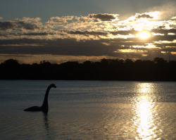 wr3n:  Sunrise over Lake of the Isles Minne the Lake Creature is hanging out there these days.