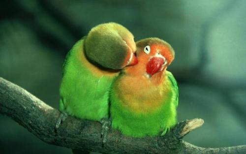 Is that a cheek? Here's a peck :)