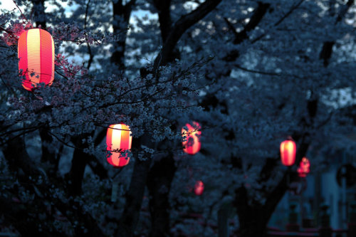 My Bohemian Aesthetic  Lanterns and cherry blossoms