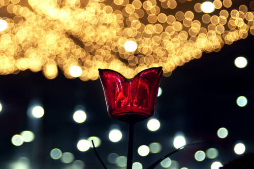 bokeh by Qusai Akoud on Flickr.