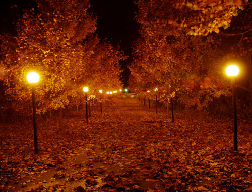 dreamingnonfiction:  Autumn Night.