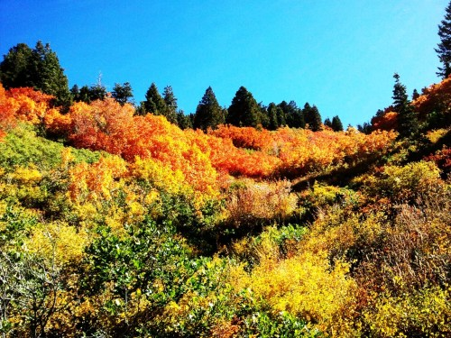 utahigh:  Fall up Ferguson Canyon