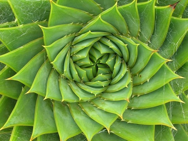 missswoonypants:  Fibonacci sequence and the Golden Ratio Fucking amazing.
