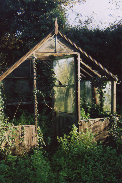 overgrown greenhouse