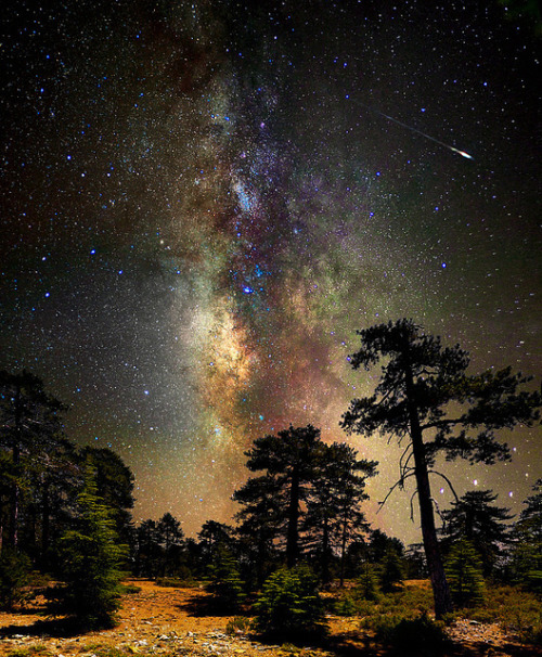 magicalnaturetour:  Deep space, deep in the forest by CostaDinos on Flickr.