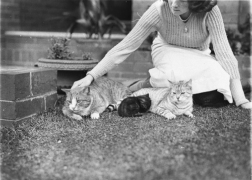Girl with two cats and a kitten, Sydney, 1930s / Sam Hood via State Library of New South Wales collection.