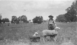 Yap Yap (dog) in cart pulled by Achong - Trundle, NSW, n.d. / by unknown photographer by State Library of New South Wales collection on Flickr.