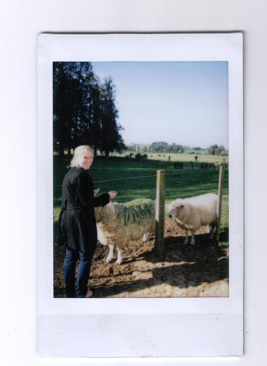 In New Zealand.Ever so slightly appalled.Surrounded by sheep.To be continued…..