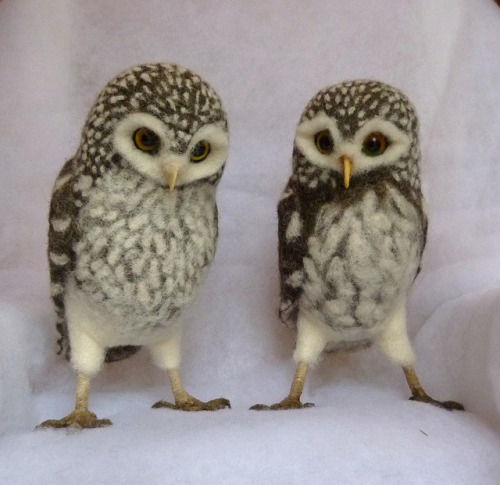 asteroidavenue:  Two more little owls by helenpriem on Flickr.  NOPE. Chuck Testa.