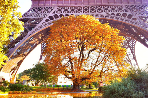 timoelliott:  Autumn Eiffel Tower