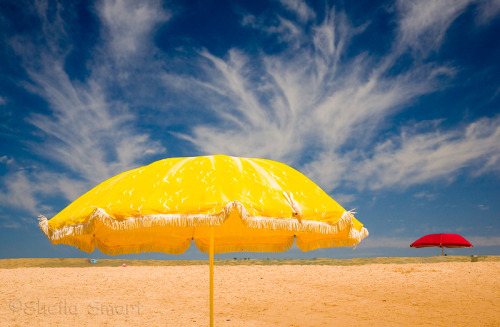 Yellow umbrella at Narrabeen Beach, Sydney, Australia (via Sheila Smart photos at pbase.com)