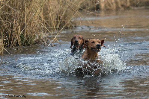 hounddogsrunning:  Hunting the fox  photoez49: are they having fun or what?