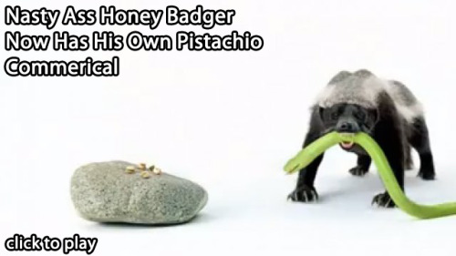 collegehumor:  Nastyass Honey Badger Gets a Pistachio Commercial