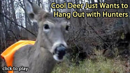 Cool Deer Just Wants To Chill With Hunters  He brought a sixer of Miller Genuine Draft and all the raccoon carcass you can eat.